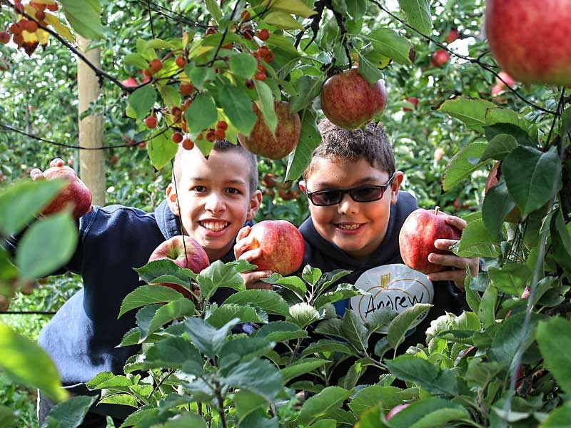 Boys and Apples